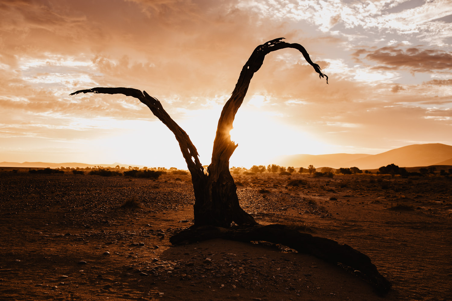 dead-camelthorn-tree-at-sunset