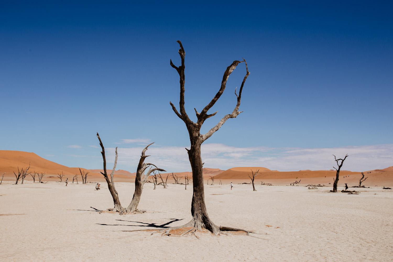 dead-vlei-camel-thorn-tree-sossusvlei