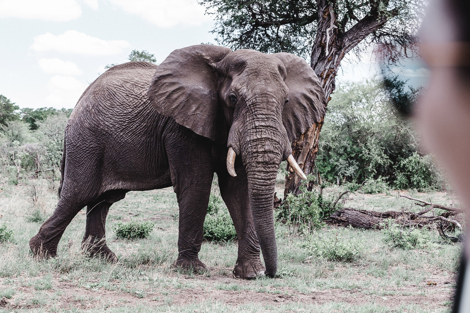 elephant while a game drive in Caprivi strip